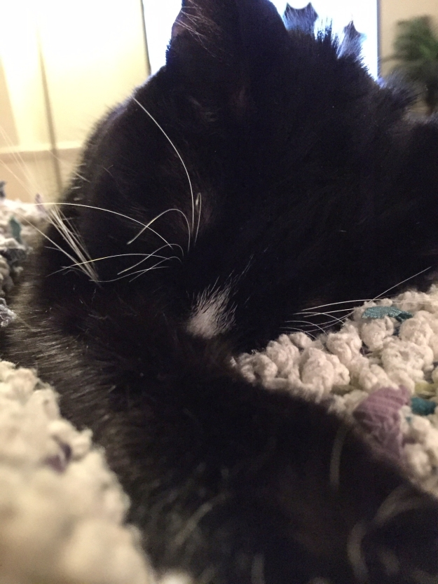 Tux sleeping 3
