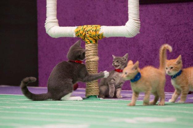 Kitten bowl 2