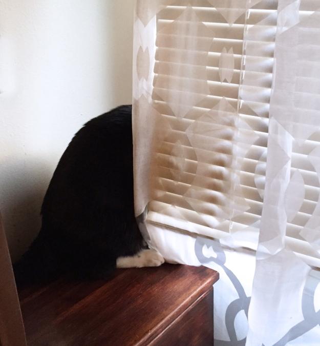 Peeping Tux