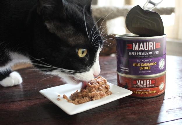 Tux eating MAURI cat food