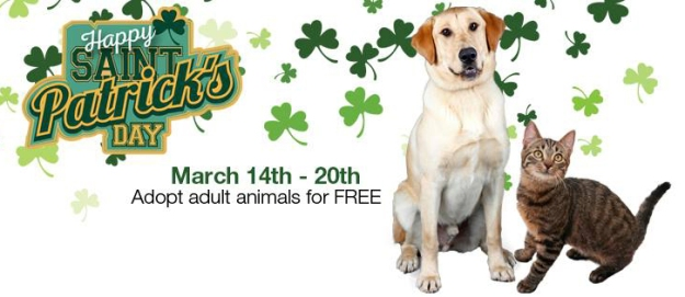 SF SPCA St. Patty's Day adoptions