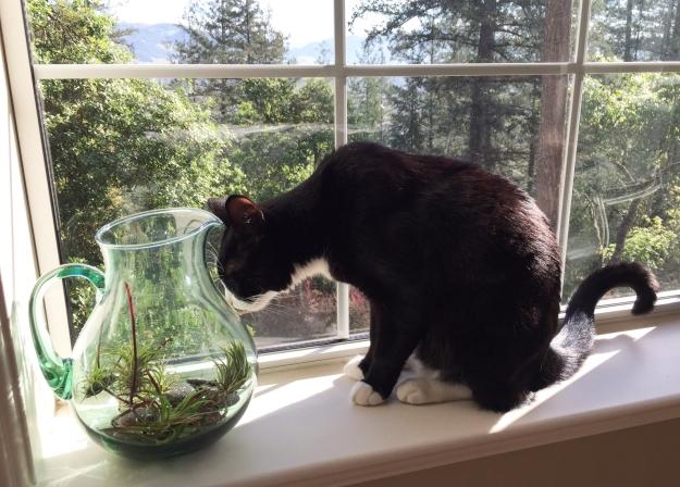 Tux gardening 2