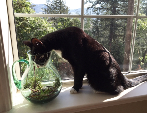 Tux gardening 3