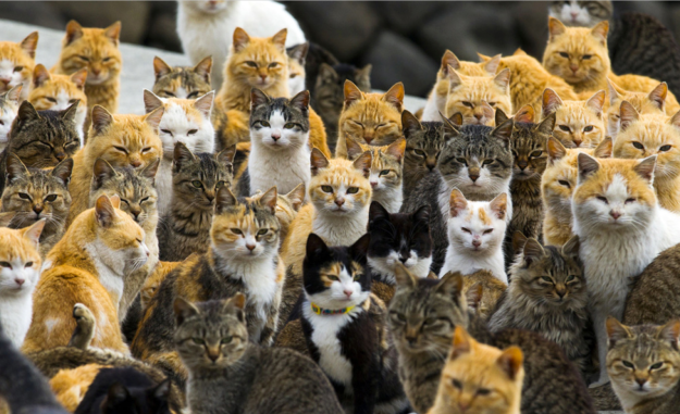 Cat island 1