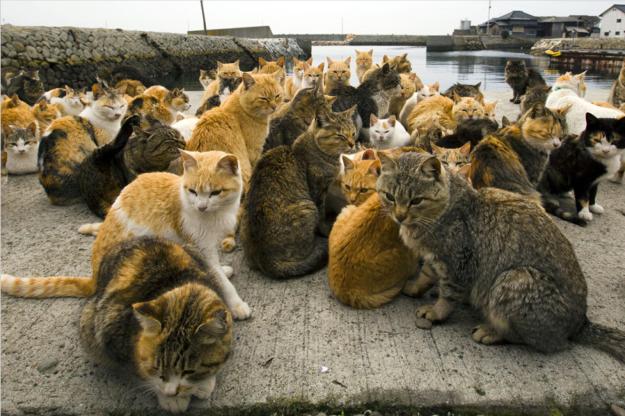 Cat island 4