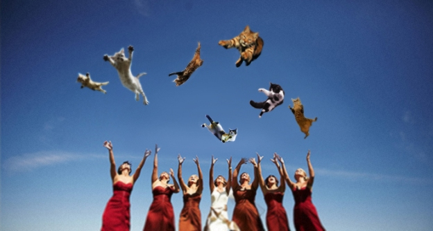 Brides Throwing Cats 3