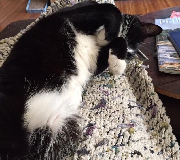 Tux belly fluff