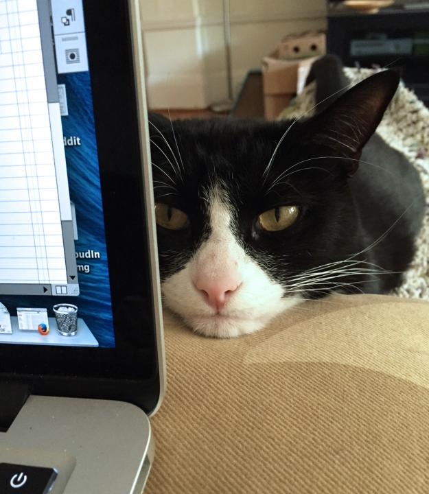 Tux supervising