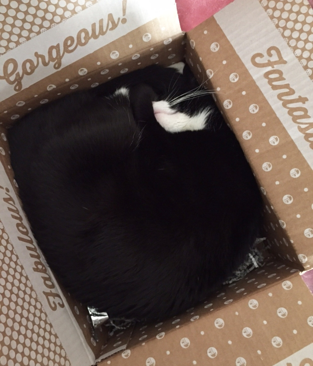 Tux curled up in box