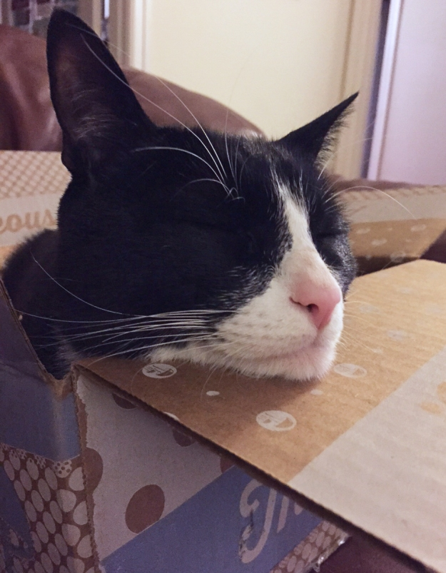Tux chin on box