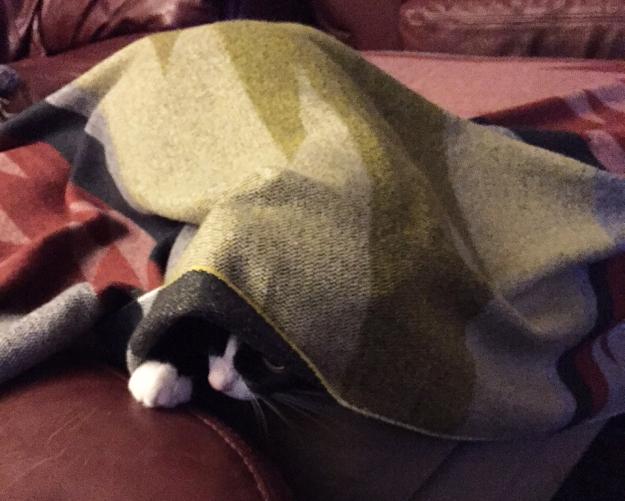 Tux under blanket