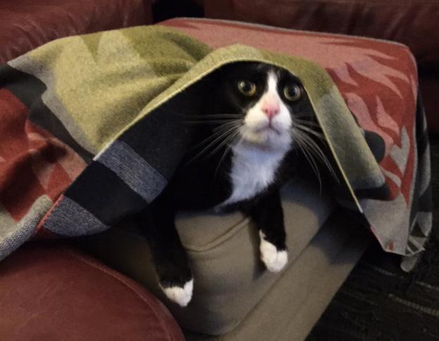 Tux under blanket 2