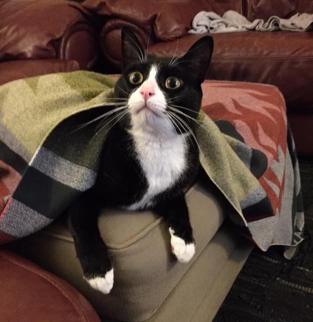 Tux under blanket 3