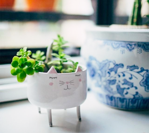 Kitty dish as succulent pot