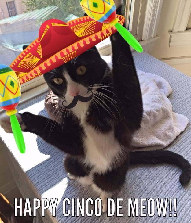 Tux cinco de meow