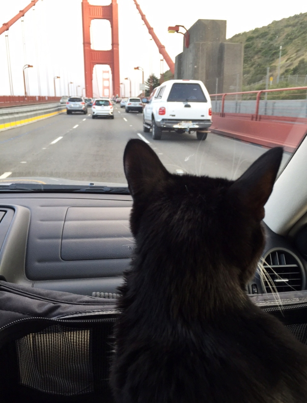 Tux and the gg bridge