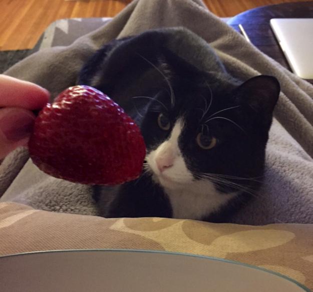 Tux strawberry