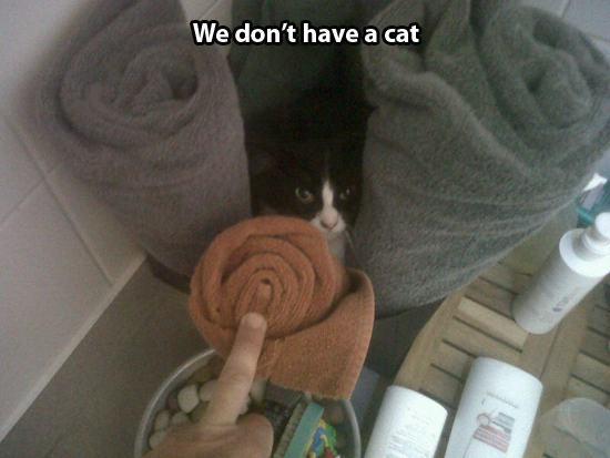Not my cat 2
