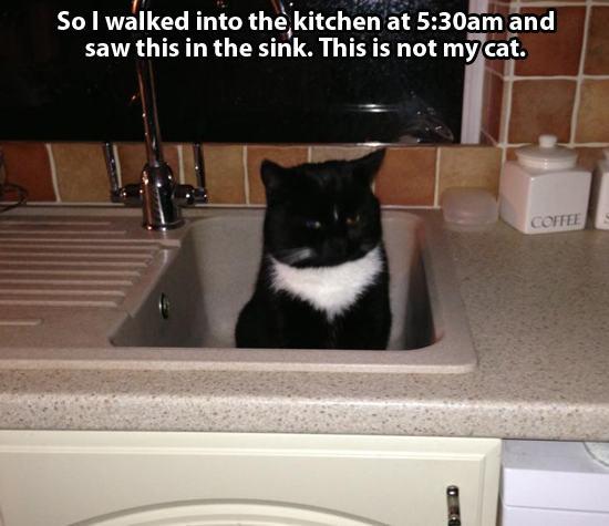 Not my cat 1