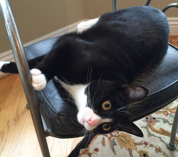 Tux in chair 2