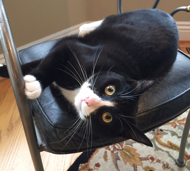 Tux in chair