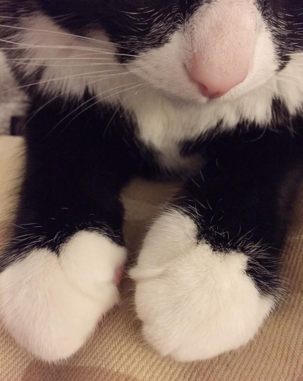 Tux paws