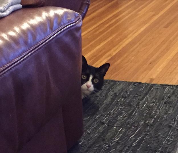 Tux peeking around corner