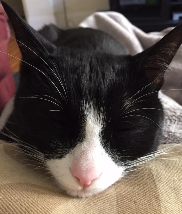 Tux chin sleeping 2