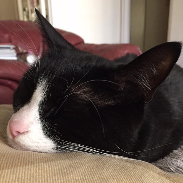 Tux chin sleeping 3