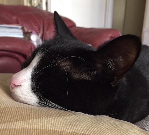 Tux chin sleeping