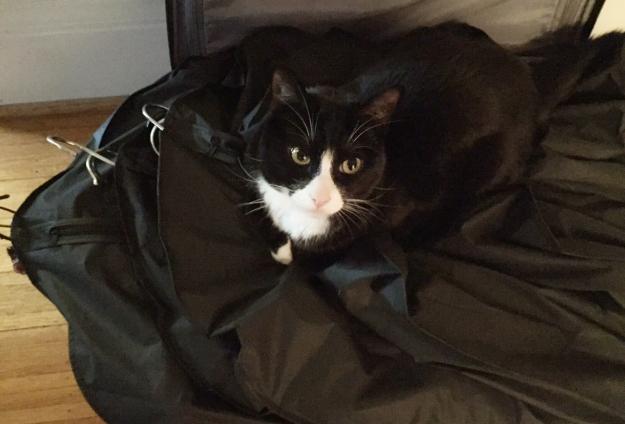 Tux fashion assistant