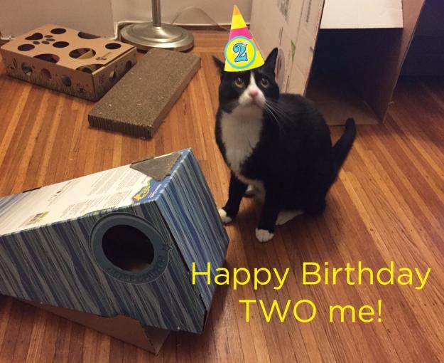 Tux birthday