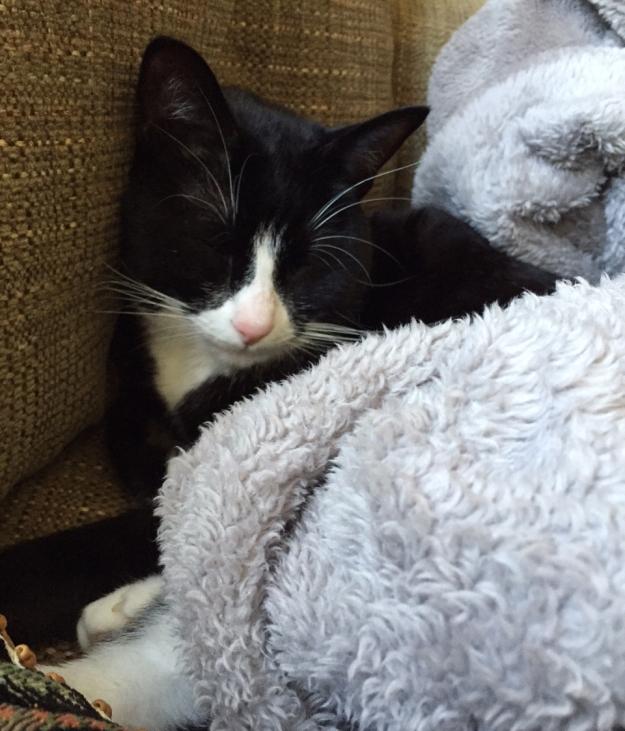 Tux in blanket 4