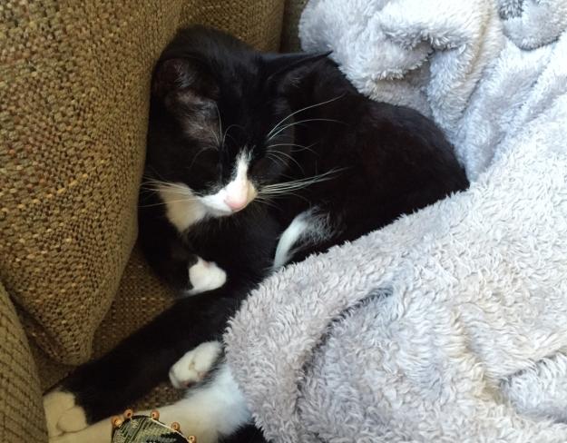 Tux in blanket 2