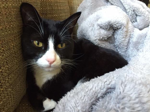Tux in blanket
